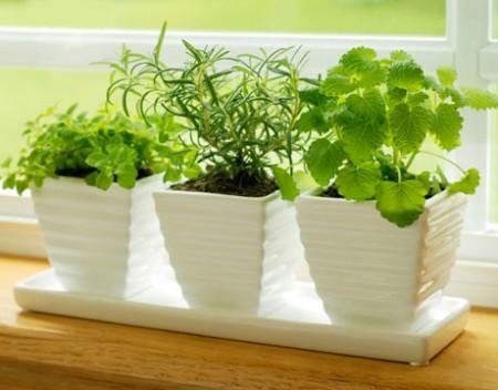 Комнатные растения как ухаживать за